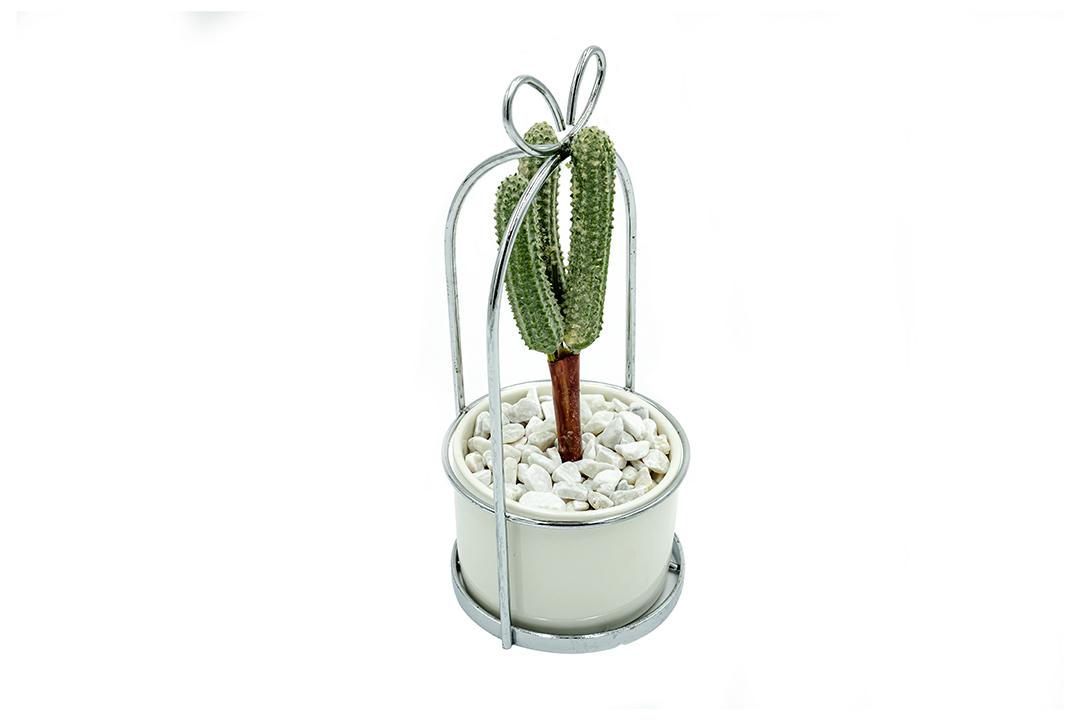 Artificial plant ต้นไม้ปลอม ต้นไม้ประดับตกแต่ง Cactus No.3 รุ่น ST210507-2C